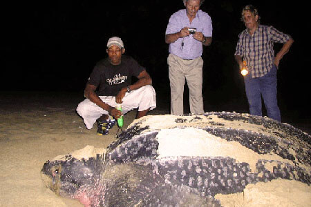 St Lucia Turtle Tours