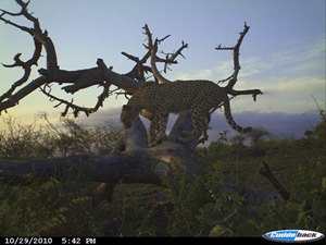 cheetah-leopard-id-project